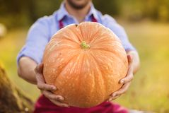 Gardener with huge pumpkin Stock Image