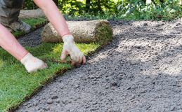 Gardener installing rolls of sod grass. On a new lawn royalty free stock photos
