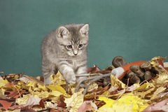 Gardener kitty. Royalty Free Stock Images