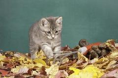 Gardener kitty. Royalty Free Stock Images