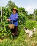 Gardener life Royalty Free Stock Photo