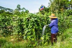 Gardener life Royalty Free Stock Image