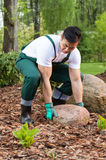 Gardener lifting a stone Royalty Free Stock Photography