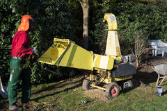 Gardener loading wood chipper with cutted boughs Stock Image