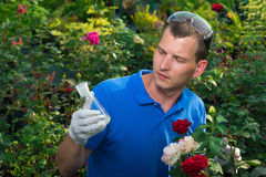 Gardener looking at flask with fertilizer on the roses background Royalty Free Stock Photos