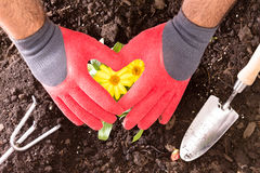 Gardener making a heart with his gloved hands Stock Photo