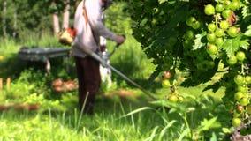 Gardener man cut grass near rural well house and currant bush Stock Photo