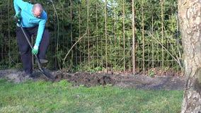 Gardener man dig flower bed soil ground near rose sprouts. 4K. Gardener man with spade dig flower bed soil ground near steel hedge fence and rose sprouts in stock video