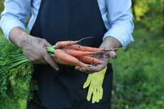 Gardener man holding carrot harvest in a hand Royalty Free Stock Photos