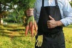 Gardener man holding carrot harvest in a hand Stock Image