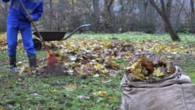Gardener man rake fall leaves and empty cart during autumn works in yard. 4K stock video footage
