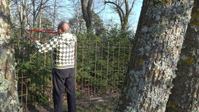 Gardener man trim fir tree hedge with clippers. 4K. Gardener man in yellow jacket trim hedge fence with two handle red clippers on blue sky and spring trees stock video