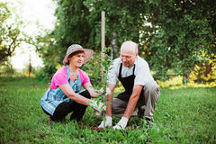 Gardener. Royalty Free Stock Photos