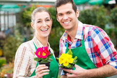 Gardener in market garden or nursery Stock Photography