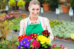 Gardener in market garden or nursery Royalty Free Stock Photography
