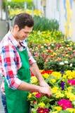 Gardener in market garden or nursery Stock Image
