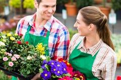 Gardener in market garden or nursery Royalty Free Stock Photography