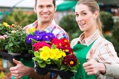 Gardener in market garden or nursery Stock Photo