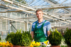 Gardener in market  nursery Stock Images