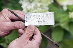 Gardener with metal labeling plate in his hands. Gardener with metal labeling plate for a Hydrangea Paniculata Vanille Fraise in his hands Stock Photos