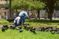 Gardener in Miraflores, Lima, Peru Royalty Free Stock Image