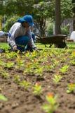 Gardener in Miraflores, Lima, Peru Stock Images