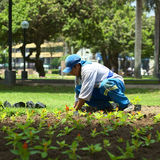 Gardener in Miraflores, Lima, Peru Stock Photos