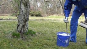 Gardener mix whitewash liquid in blue bucket near apple fruit tree. Static shot stock video