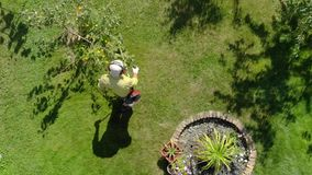 Gardener mows grass under trees in garden