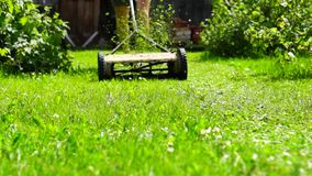 Gardener mows lawn with lawnmover stock video