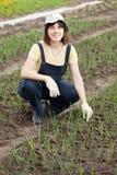 Gardener at  onion plant. Female gardener at  onion plant in spring Royalty Free Stock Photo