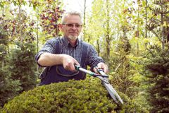 A gardener in overalls cuts bushes royalty free stock image