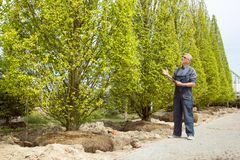 A gardener in overalls examines purchased trees in garden shop stock photos