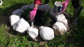 Gardener painting stones in the garden stock footage