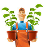 Gardener with plant in flowerpot Royalty Free Stock Image
