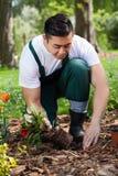 Gardener planting flowers Stock Images