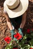 Gardener planting flowers Stock Photography