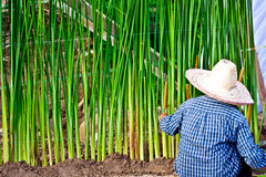 Gardener planting grass royalty free stock photos