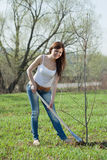 Gardener planting tree  in spring Royalty Free Stock Photography