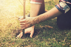 Gardener planting a tree. While working in the garden stock image
