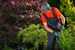 Gardener Plants Cutting Royalty Free Stock Photos