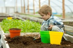 Gardener in polytunnel. gardener polytunnel greenhouse. small boy gardener working in polytunnel orangery. modern