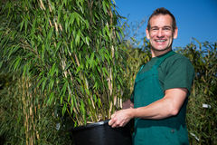 Gardener posing with bamboo at nursery Royalty Free Stock Photo
