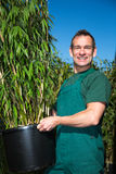 Gardener posing with bamboo plant at nursery Royalty Free Stock Photo