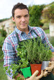 Gardener with pots of aromatic herbs in hands Stock Photography