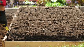 Gardener prepare soil before planting. Female gardener in black gloves prepare soil to planting seeds. Make rows with shovel in soil before planting seeds stock footage