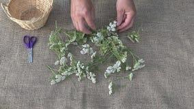 Gardener preparing to dry herbs, 4K stock video footage