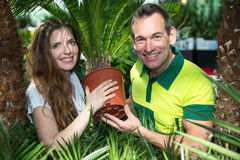 Gardener presenting potted palm tree at nursery Royalty Free Stock Photos