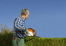 Gardener pruning thuja hedge with hedge clippers Stock Images