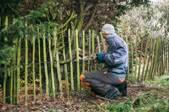 Gardener pruning tree Stock Images